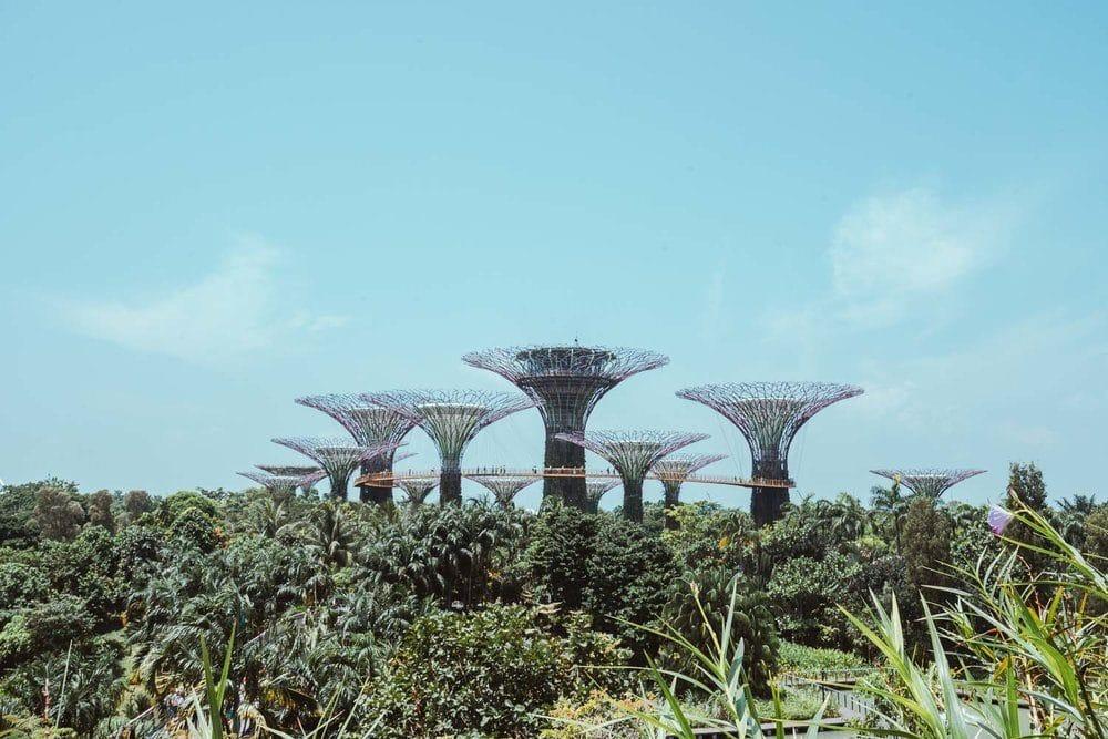 gardens-by-the-bay-singapura-5662419