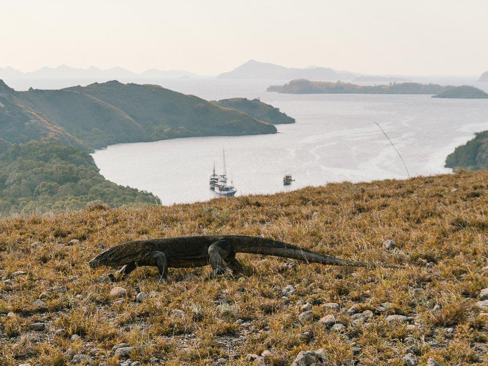 Rinca-Island-Dragao-de-Komodo-Labuan-Bajo-Flores-Indonesia