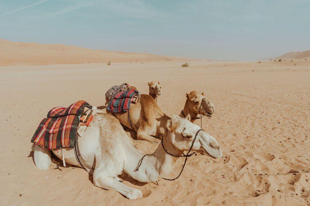 desert-nights-camp-tudo-o-que-vocc3aa-precisa-saber-sobre-passar-uma-noite-no-deserto-wahibasands-em-omc3a3-6153087
