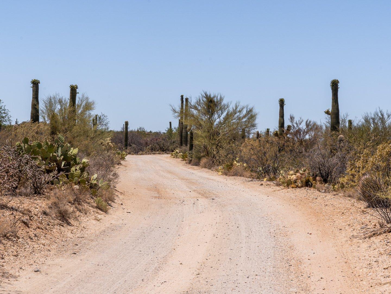 Saguaro National Park Scenic Drive road